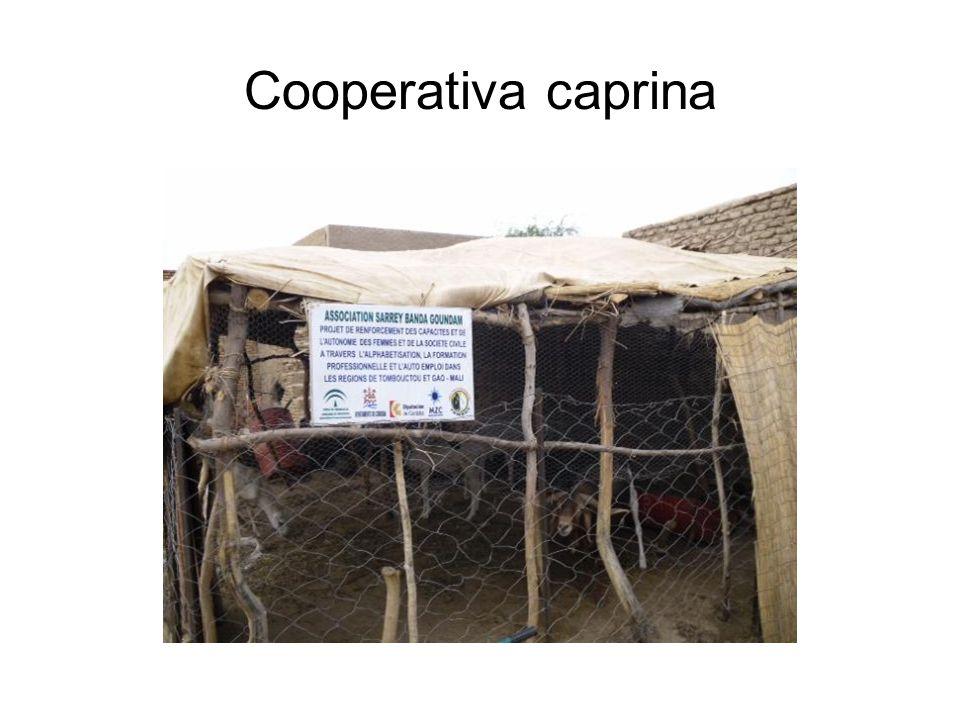Cooperativa caprina