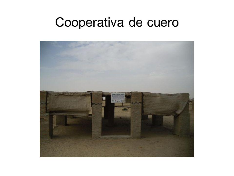 Cooperativa de cuero