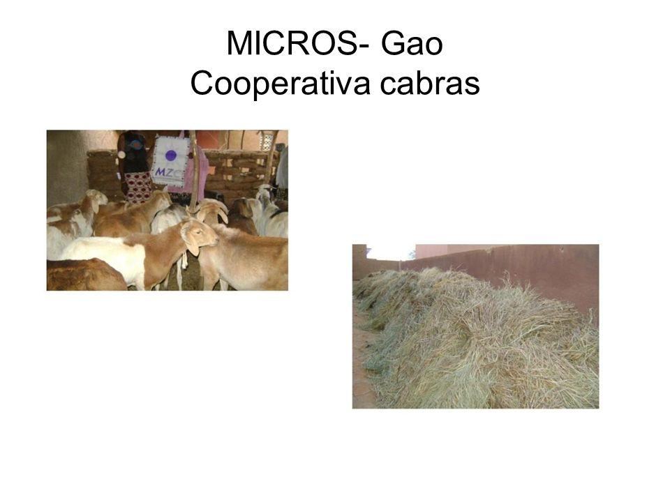 MICROS- Gao Cooperativa cabras