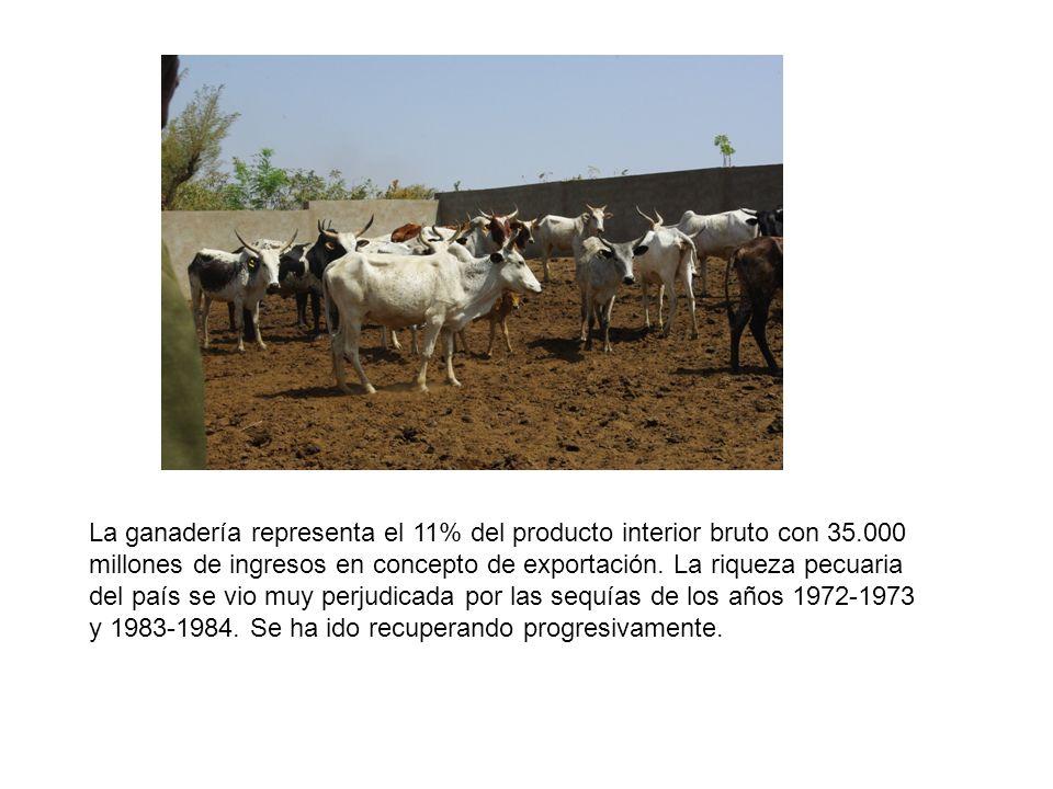 La ganadería representa el 11% del producto interior bruto con 35.000 millones de ingresos en concepto de exportación.