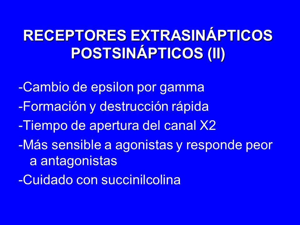 RECEPTORES EXTRASINÁPTICOS POSTSINÁPTICOS (II) -Cambio de epsilon por gamma -Formación y destrucción rápida -Tiempo de apertura del canal X2 -Más sens