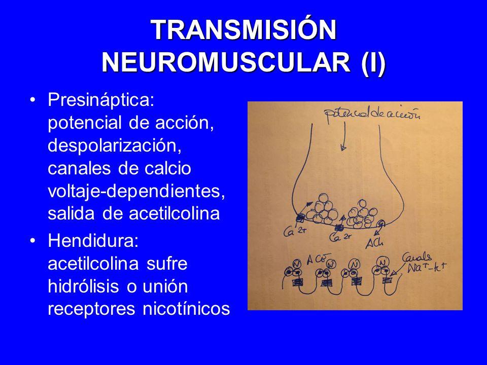 TRANSMISIÓN NEUROMUSCULAR (I) Presináptica: potencial de acción, despolarización, canales de calcio voltaje-dependientes, salida de acetilcolina Hendi