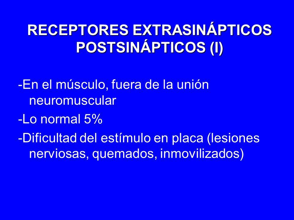 RECEPTORES EXTRASINÁPTICOS POSTSINÁPTICOS (II) -Cambio de epsilon por gamma -Formación y destrucción rápida -Tiempo de apertura del canal X2 -Más sensible a agonistas y responde peor a antagonistas -Cuidado con succinilcolina