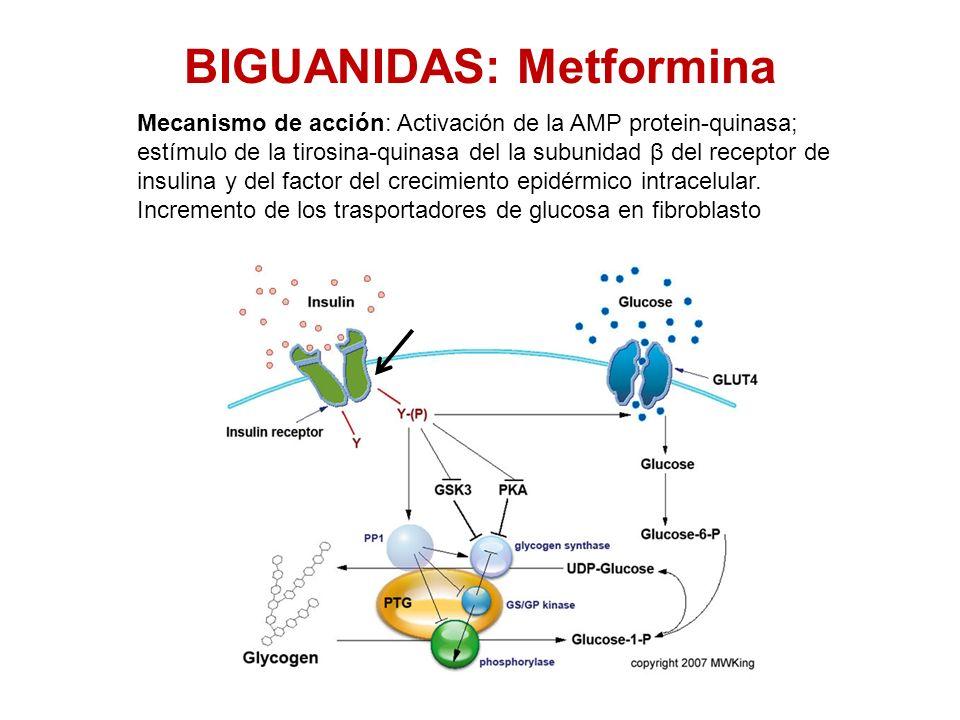 BIGUANIDAS: Metformina Mecanismo de acción: Activación de la AMP protein-quinasa; estímulo de la tirosina-quinasa del la subunidad β del receptor de i