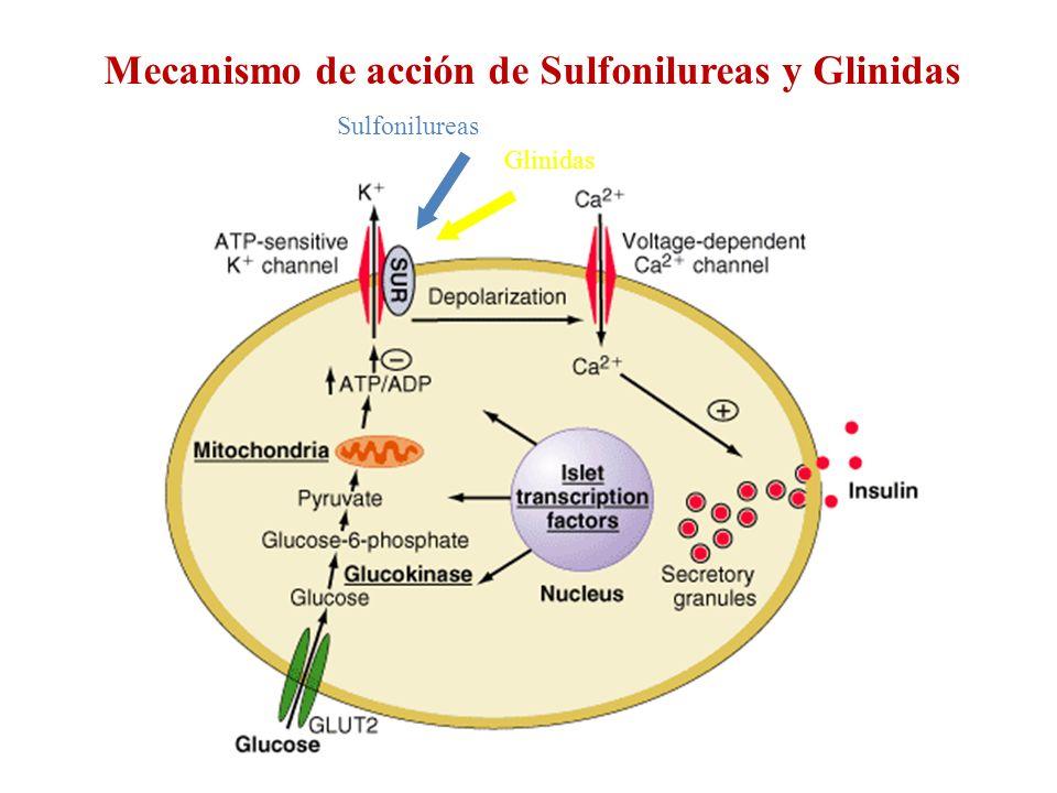 Glinidas Sulfonilureas Mecanismo de acción de Sulfonilureas y Glinidas