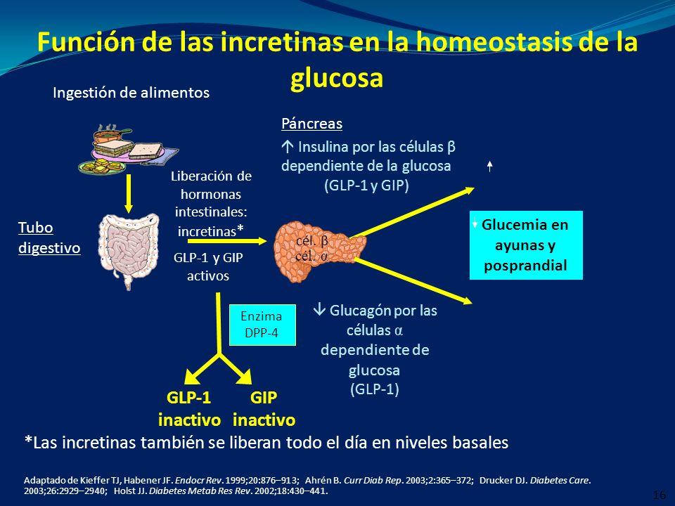 Función de las incretinas en la homeostasis de la glucosa Adaptado de Kieffer TJ, Habener JF. Endocr Rev. 1999;20:876–913; Ahrén B. Curr Diab Rep. 200
