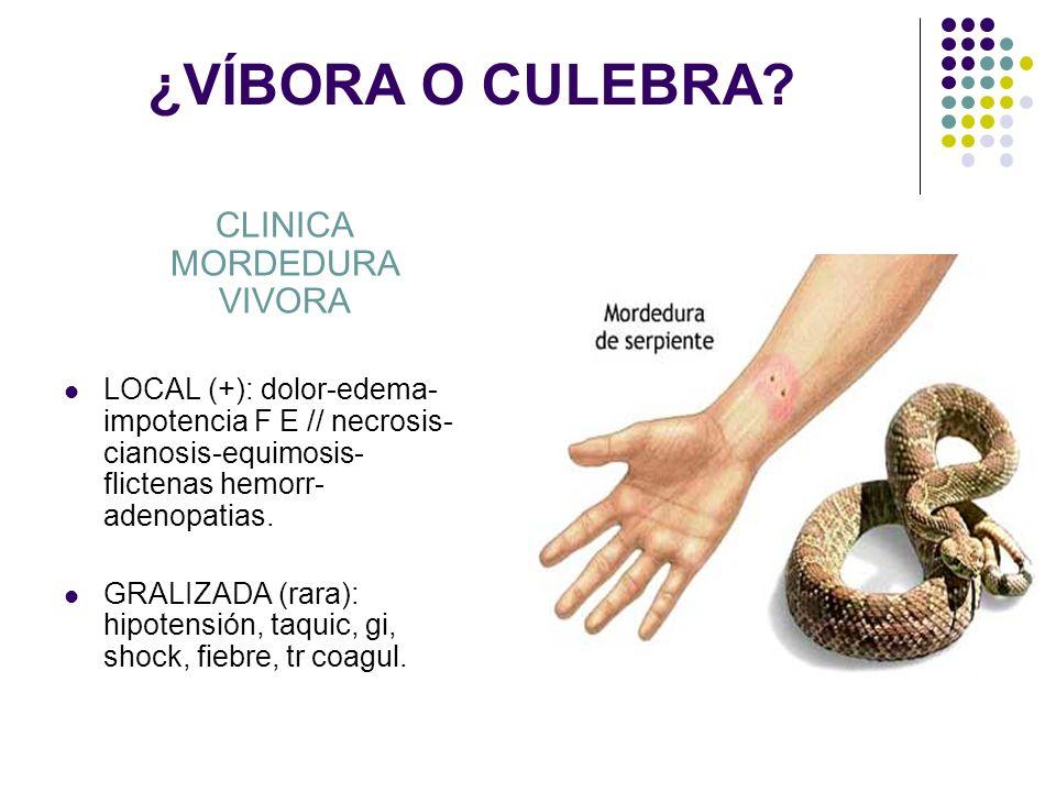 ¿VÍBORA O CULEBRA? CLINICA MORDEDURA VIVORA LOCAL (+): dolor-edema- impotencia F E // necrosis- cianosis-equimosis- flictenas hemorr- adenopatias. GRA