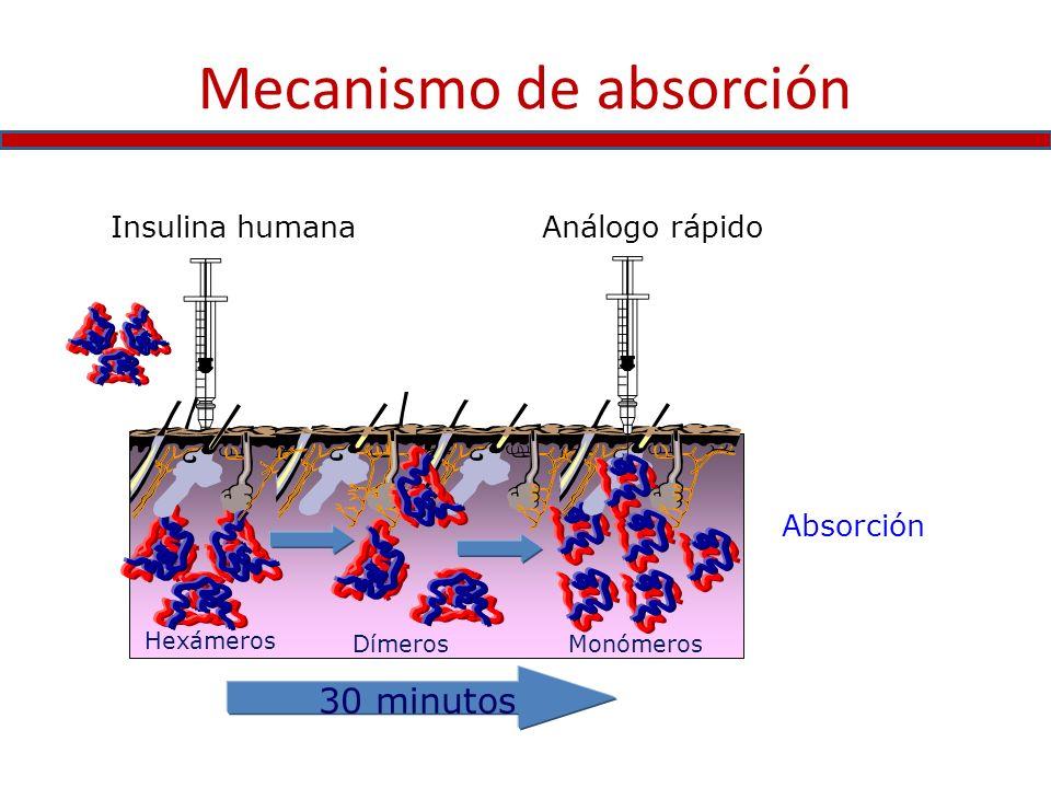Absorción Hexámeros DímerosMonómeros Insulina humanaAnálogo rápido 30 minutos Mecanismo de absorción