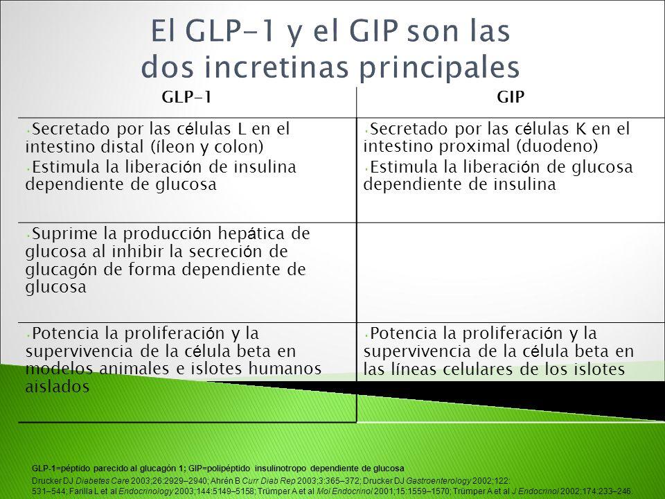 GLP-1GIP Secretado por las c é lulas L en el intestino distal ( í leon y colon) Estimula la liberaci ó n de insulina dependiente de glucosa Secretado