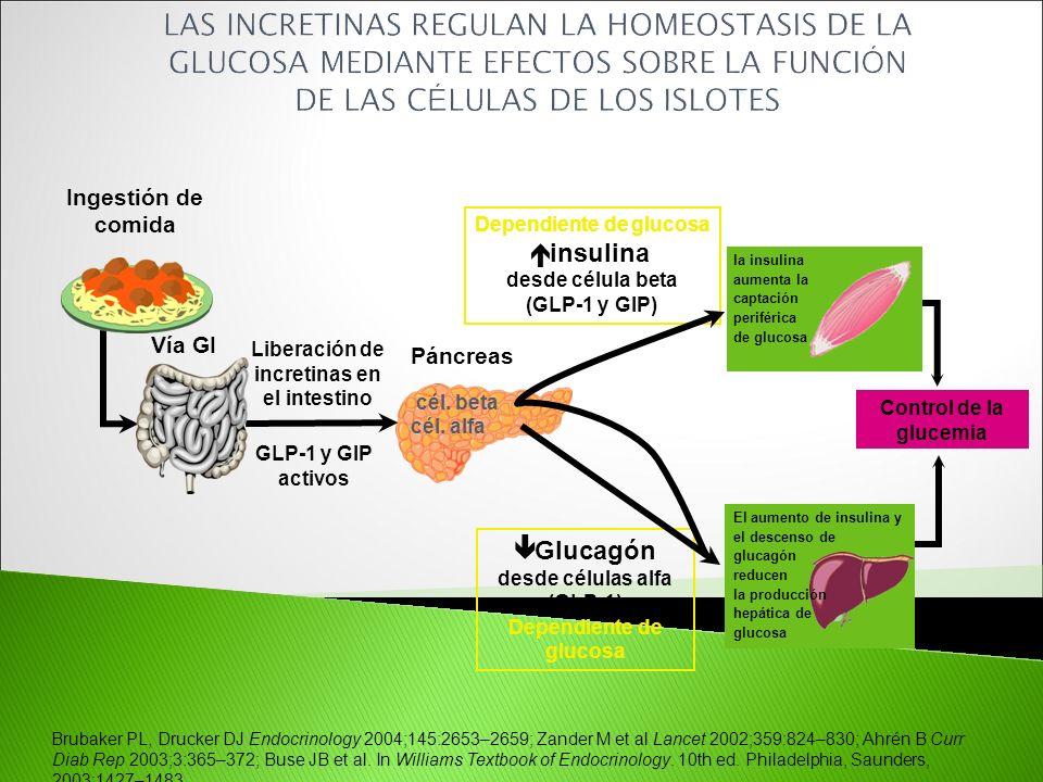 Brubaker PL, Drucker DJ Endocrinology 2004;145:2653–2659; Zander M et al Lancet 2002;359:824–830; Ahrén B Curr Diab Rep 2003;3:365–372; Buse JB et al.