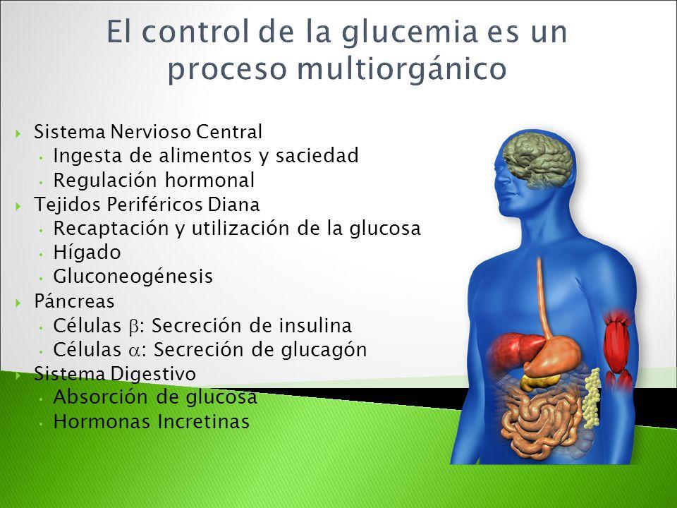 Sistema Nervioso Central Ingesta de alimentos y saciedad Regulación hormonal Tejidos Periféricos Diana Recaptación y utilización de la glucosa Hígado