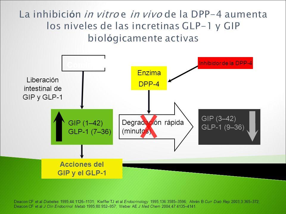 Deacon CF et al Diabetes 1995;44:1126–1131; Kieffer TJ et al Endocrinology 1995;136:3585–3596; Ahrén B Curr Diab Rep 2003;3:365–372; Deacon CF et al J