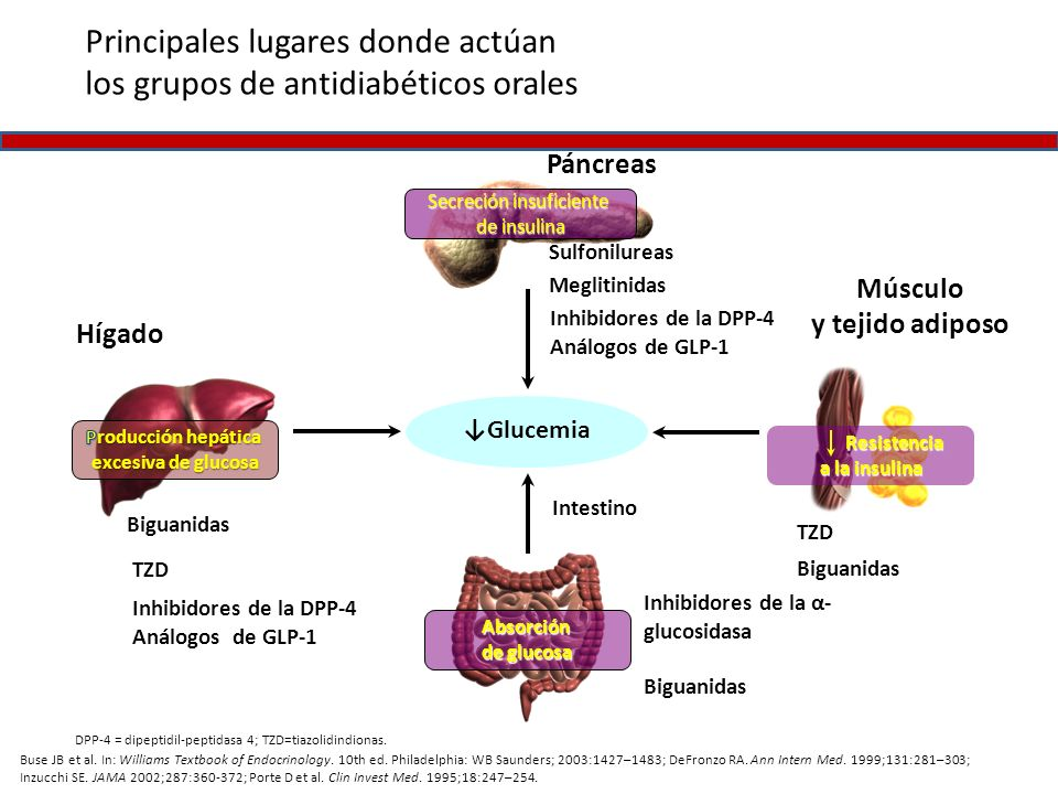 Principales lugares donde actúan los grupos de antidiabéticos orales Buse JB et al. In: Williams Textbook of Endocrinology. 10th ed. Philadelphia: WB