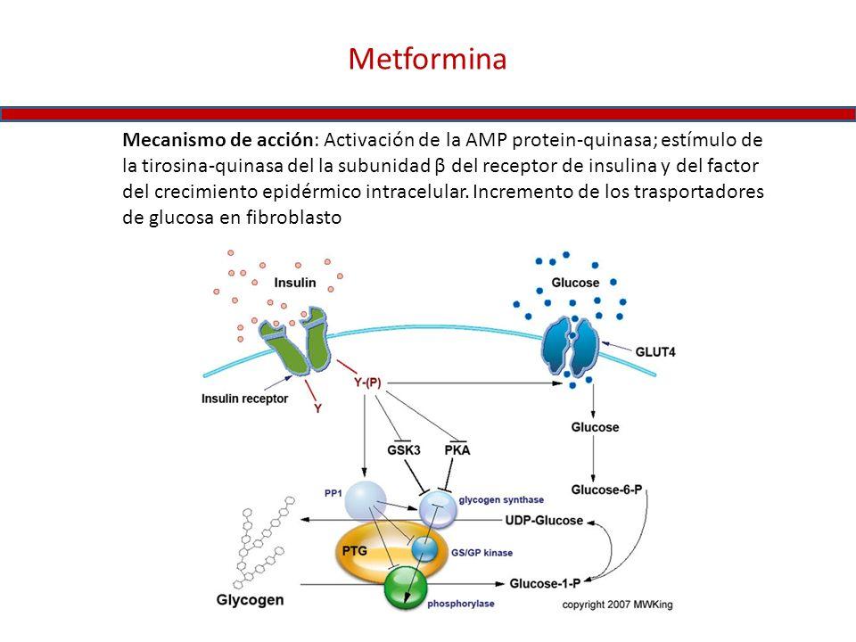Metformina Mecanismo de acción: Activación de la AMP protein-quinasa; estímulo de la tirosina-quinasa del la subunidad β del receptor de insulina y de