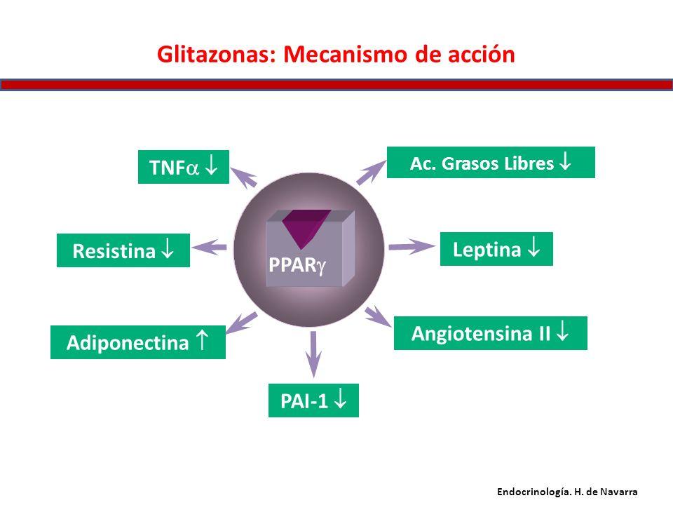 Glitazonas: Mecanismo de acción Adiponectina Resistina Angiotensina II TNF PAI-1 Ac. Grasos Libres Leptina PPAR Endocrinología. H. de Navarra