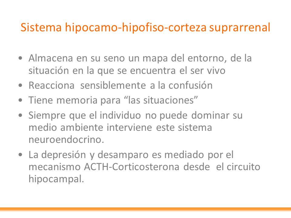 Sistema hipocamo-hipofiso-corteza suprarrenal Almacena en su seno un mapa del entorno, de la situación en la que se encuentra el ser vivo Reacciona se