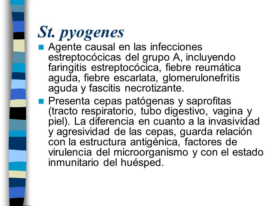 St. pyogenes Agente causal en las infecciones estreptocócicas del grupo A, incluyendo faringitis estreptocócica, fiebre reumática aguda, fiebre escarl
