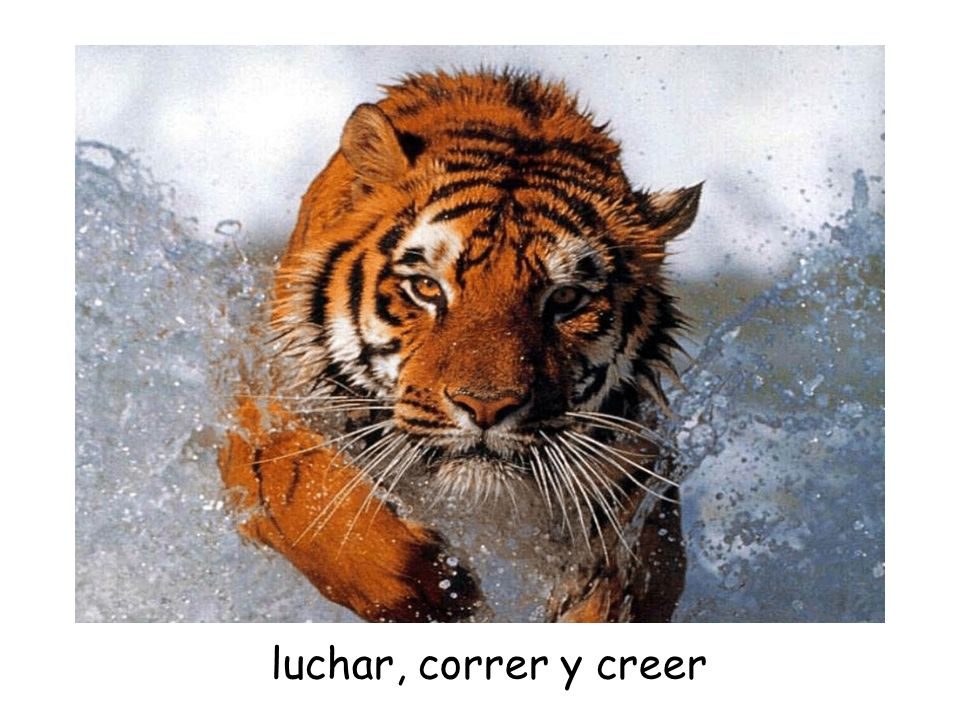luchar, correr y creer