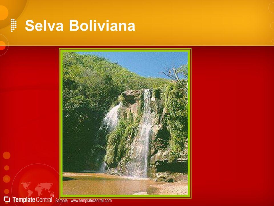 Selva Boliviana