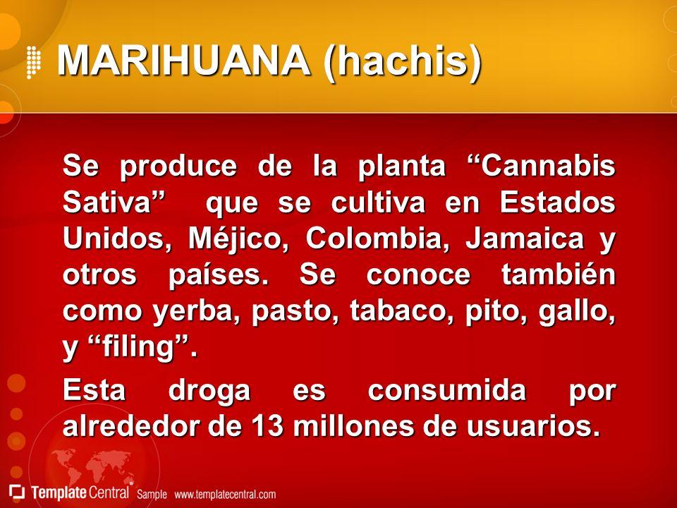 MARIHUANA (hachis) Se produce de la planta Cannabis Sativa que se cultiva en Estados Unidos, Méjico, Colombia, Jamaica y otros países. Se conoce tambi