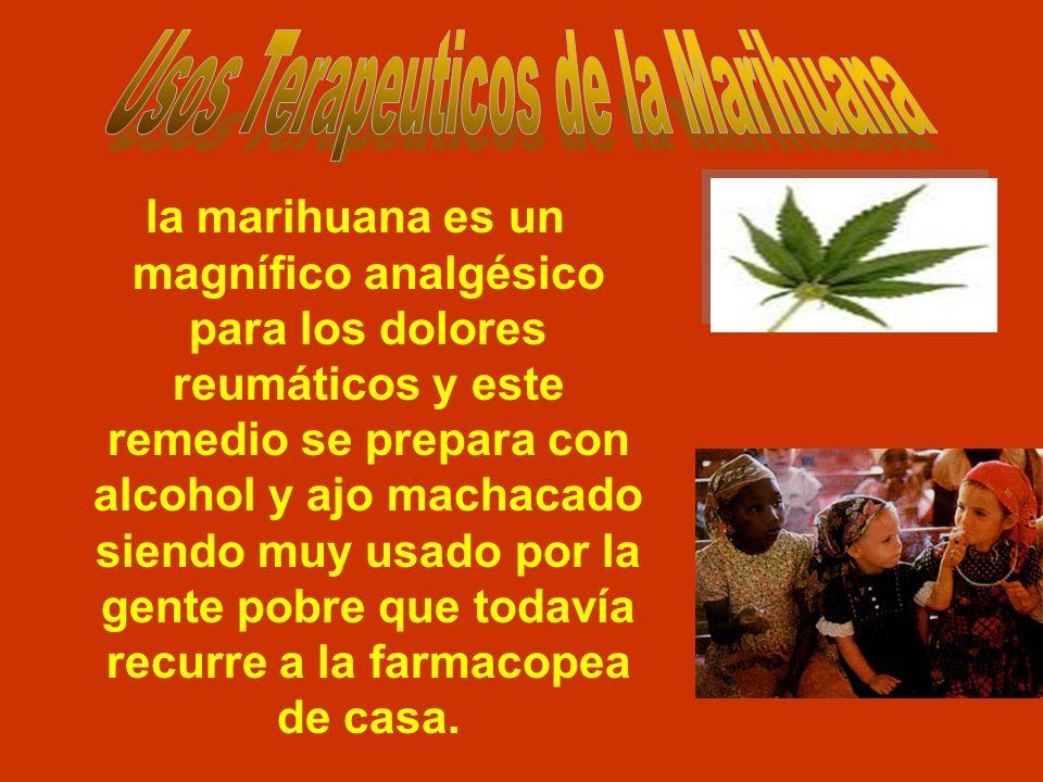la marihuana es un magnífico analgésico para los dolores reumáticos y este remedio se prepara con alcohol y ajo machacado siendo muy usado por la gent