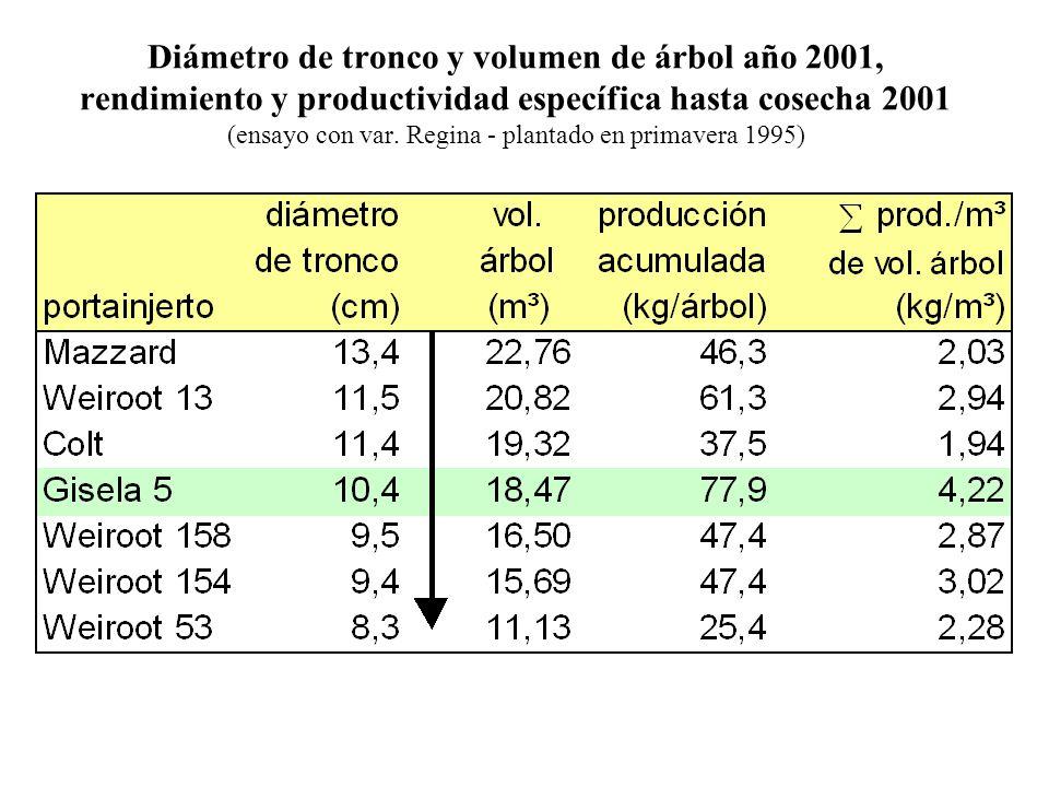 Diámetro de tronco y volumen de árbol año 2001, rendimiento y productividad específica hasta cosecha 2001 (ensayo con var. Regina - plantado en primav
