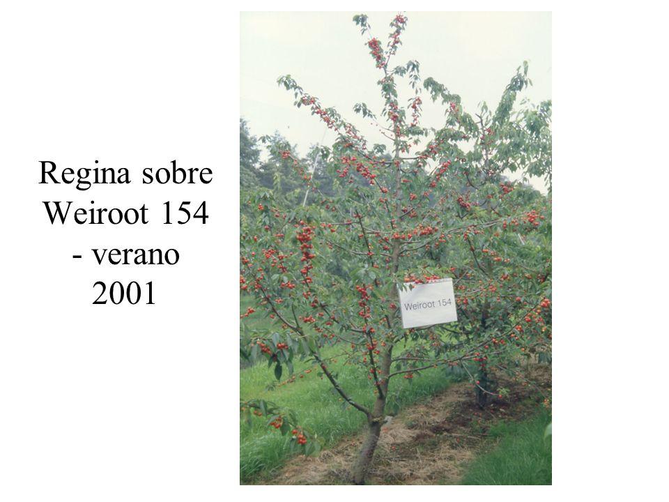 Regina sobre Weiroot 154 - verano 2001