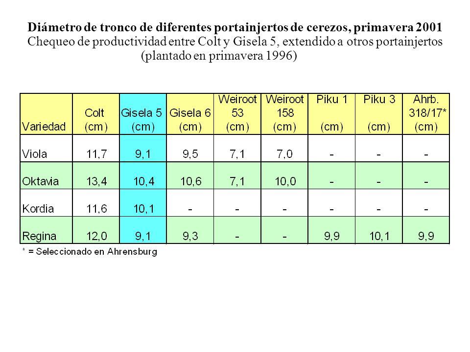Diámetro de tronco de diferentes portainjertos de cerezos, primavera 2001 Chequeo de productividad entre Colt y Gisela 5, extendido a otros portainjer