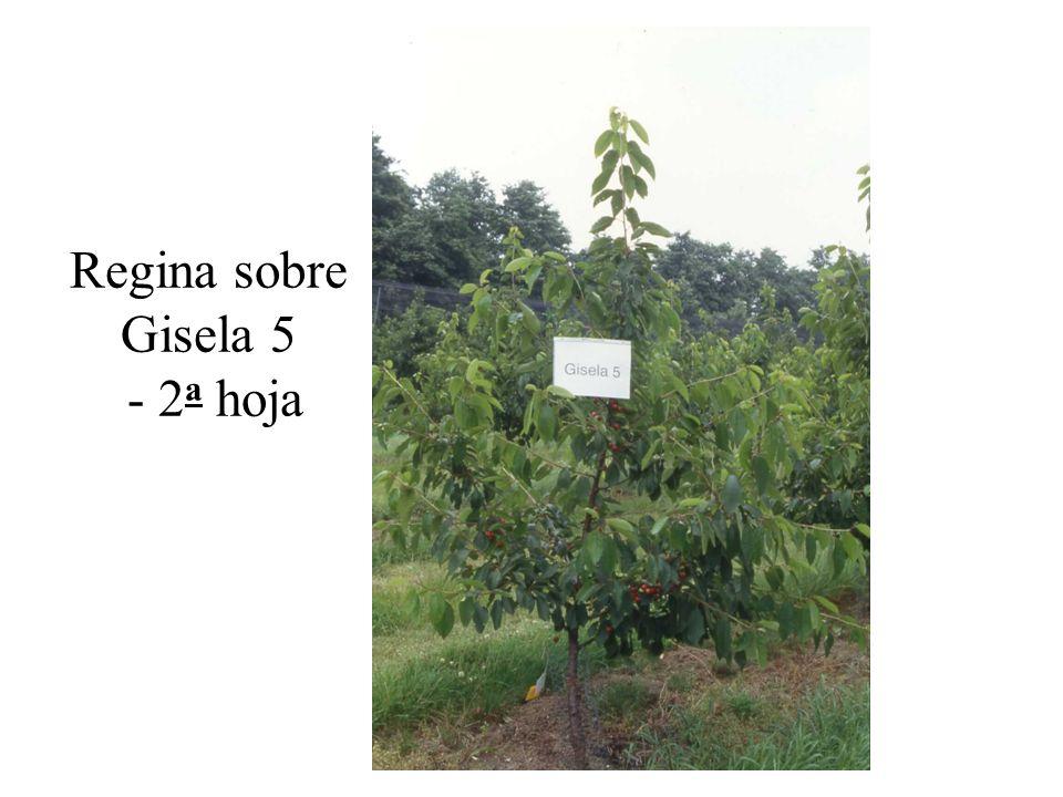 Regina sobre Gisela 5 - 2 a hoja
