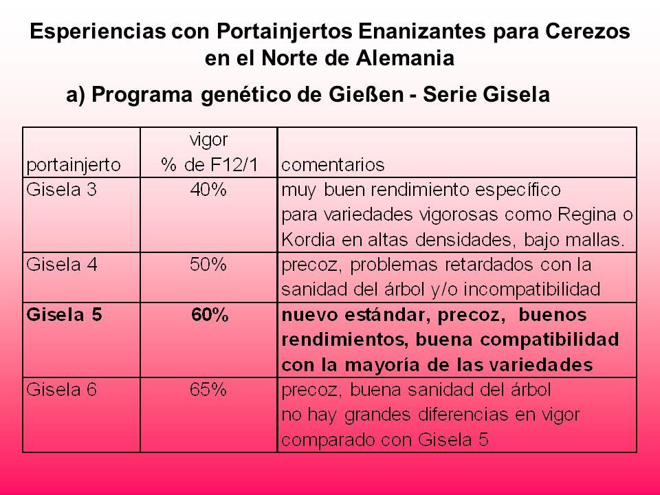 Esperiencias con Portainjertos Enanizantes para Cerezos en el Norte de Alemania a) Programa genético de Gießen - Serie Gisela