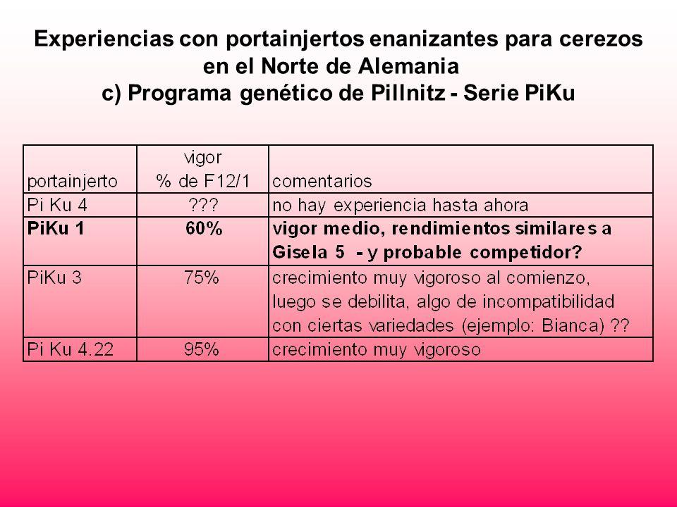 Experiencias con portainjertos enanizantes para cerezos en el Norte de Alemania c) Programa genético de Pillnitz - Serie PiKu