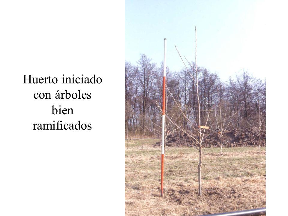 Huerto iniciado con árboles bien ramificados