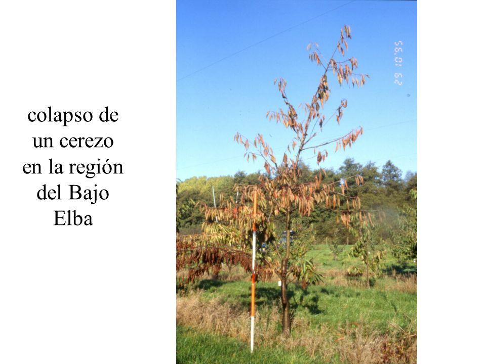 evitar árboles sin ramillas laterales