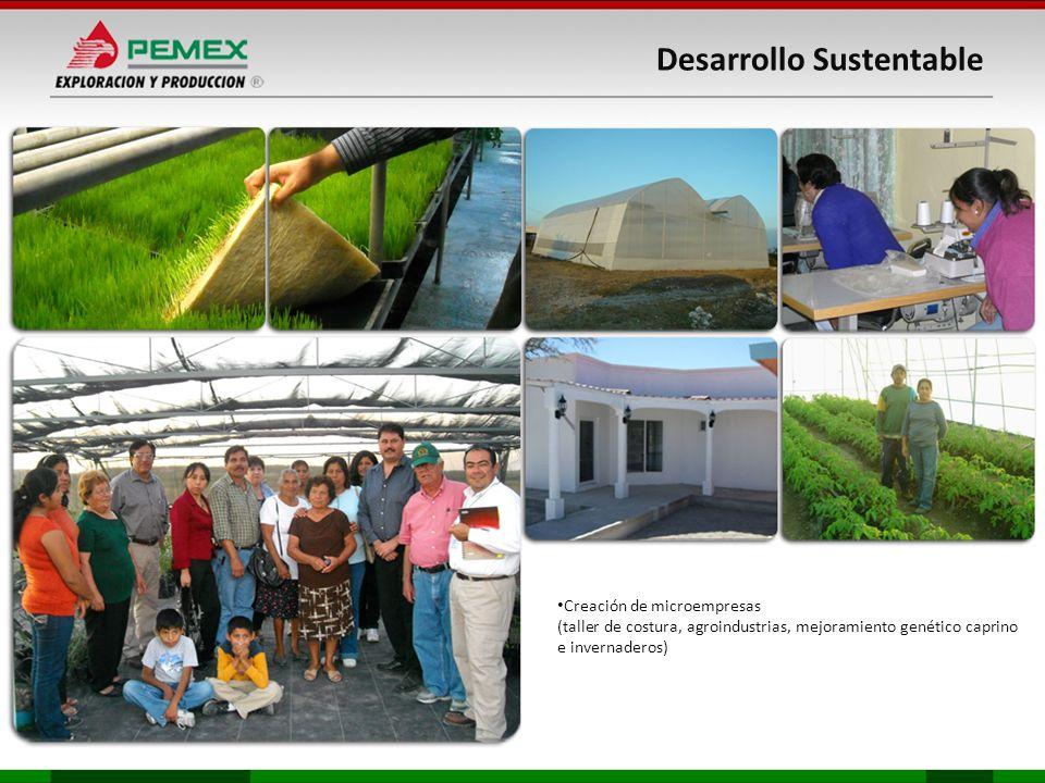 Desarrollo Sustentable Creación de microempresas (taller de costura, agroindustrias, mejoramiento genético caprino e invernaderos)