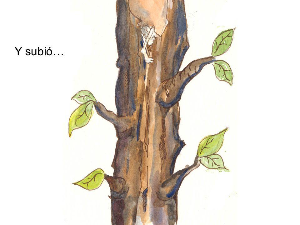 ¡Hasta que finalmente, se encontraba en la cima del árbol!