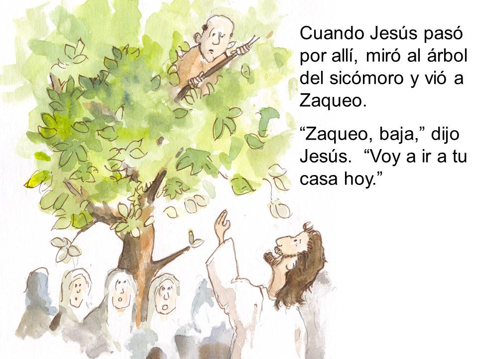 Zaqueo se bajó del árbol rápidamente. Jesús fue con Zaqueo a su casa y comió con él.