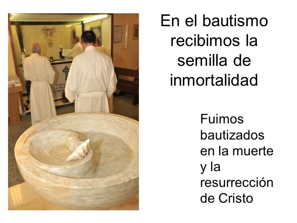 En el bautismo recibimos la semilla de inmortalidad Fuimos bautizados en la muerte y la resurrección de Cristo