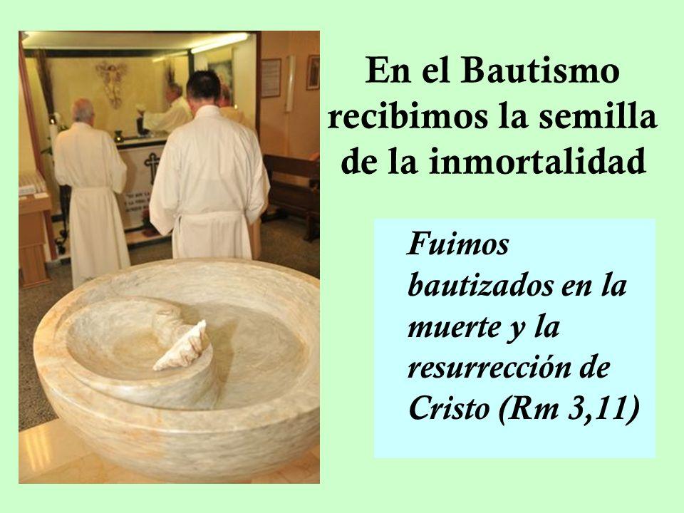 En el Bautismo recibimos la semilla de la inmortalidad Fuimos bautizados en la muerte y la resurrección de Cristo (Rm 3,11)