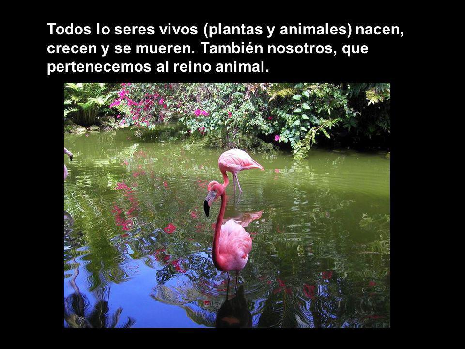 Todos lo seres vivos (plantas y animales) nacen, crecen y se mueren. También nosotros, que pertenecemos al reino animal.
