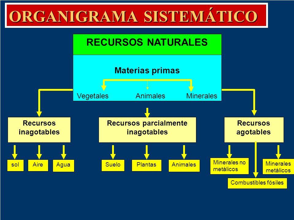 Organigrama sistemático Es aquel que organiza la información empleando una red. Se emplea para representar la relación entre los diversos elementos de