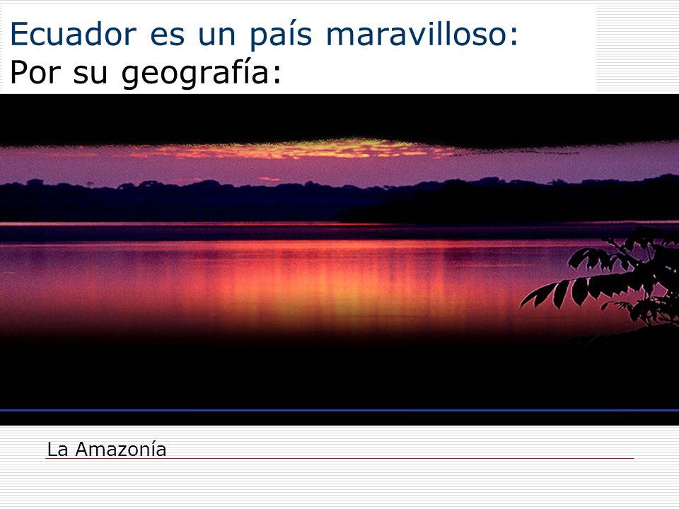 Ecuador es un país maravilloso: Por su geografía: La Amazonía