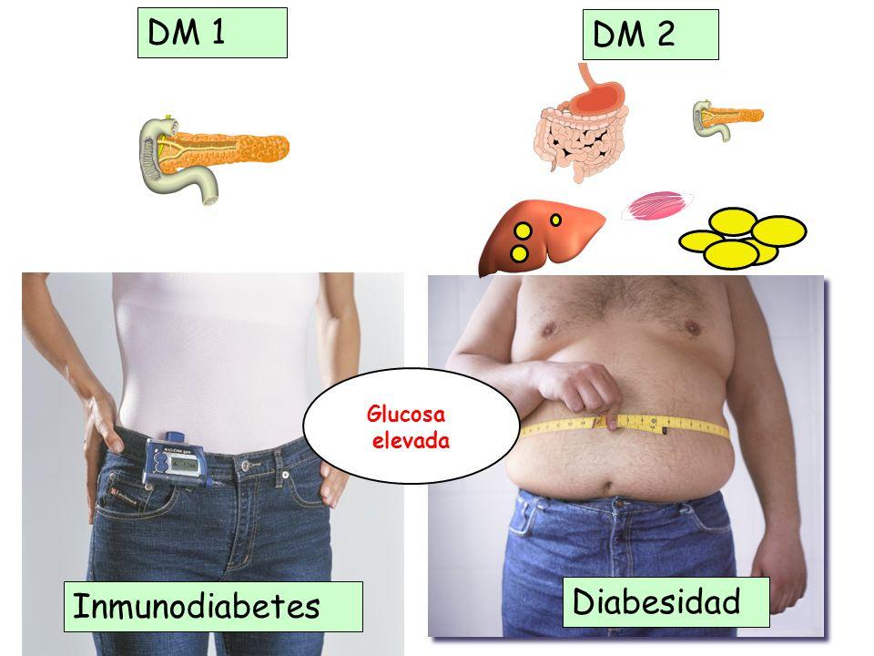 DM 1 DM 2 Diabesidad Inmunodiabetes Glucosa elevada