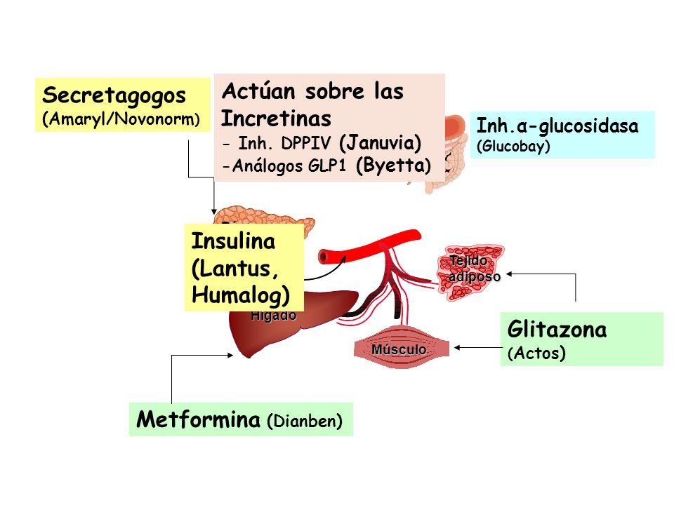 Insulina Hígado Músculo Páncreas Tejido adiposo Metformina (Dianben) Secretagogos (Amaryl/Novonorm ) Glitazona ( Actos) Inh.α-glucosidasa (Glucobay) A
