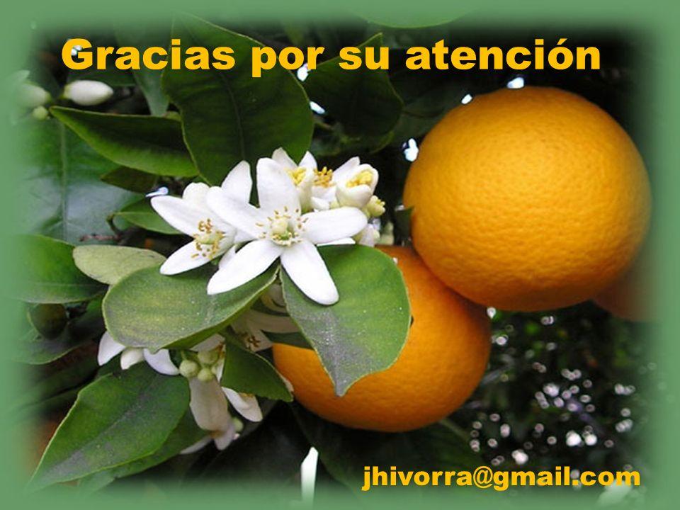 Gracias por su atención jhivorra@gmail.com