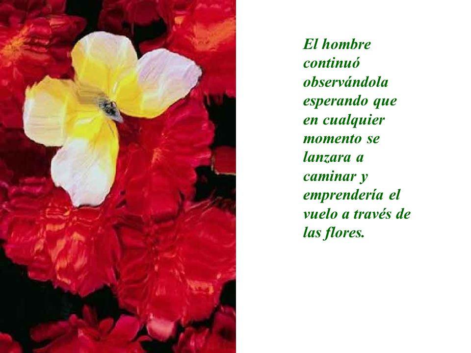 El hombre continuó observándola esperando que en cualquier momento se lanzara a caminar y emprendería el vuelo a través de las flores.
