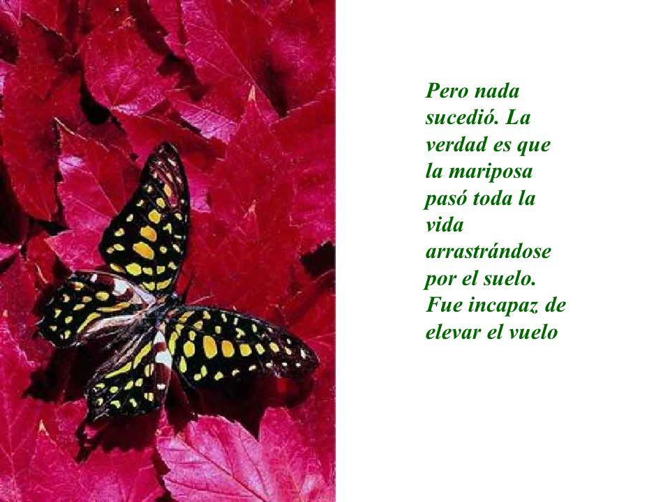 Pero nada sucedió. La verdad es que la mariposa pasó toda la vida arrastrándose por el suelo. Fue incapaz de elevar el vuelo