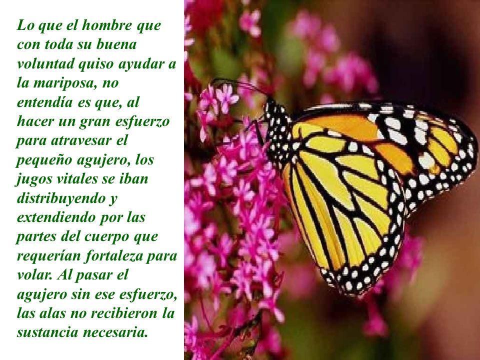 Lo que el hombre que con toda su buena voluntad quiso ayudar a la mariposa, no entendía es que, al hacer un gran esfuerzo para atravesar el pequeño ag