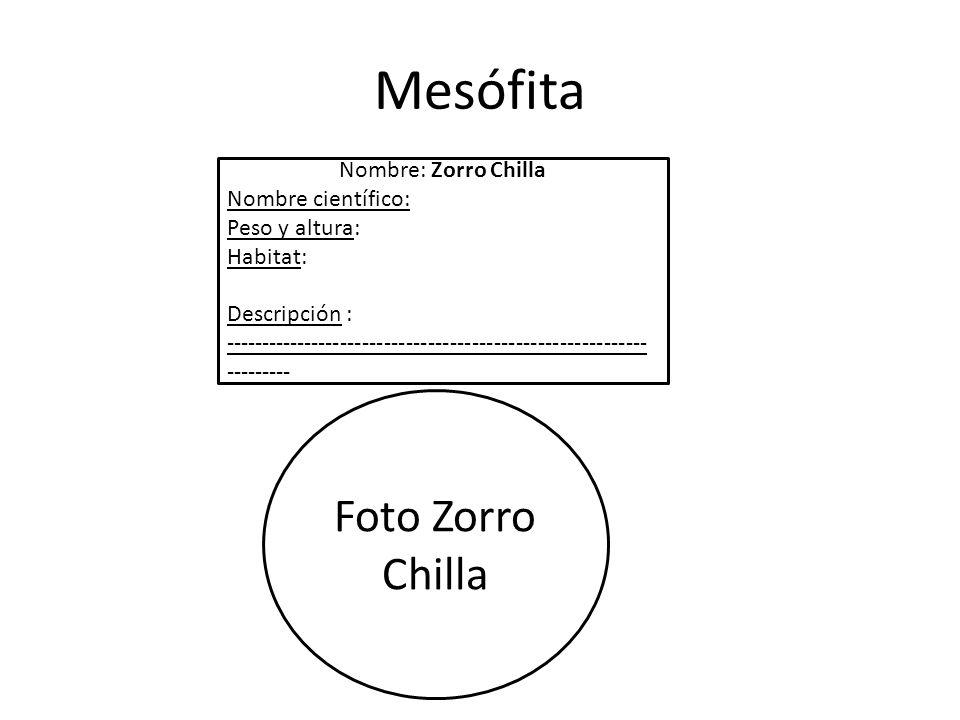 Mesófita Foto Zorro Chilla Nombre: Zorro Chilla Nombre científico: Peso y altura: Habitat: Descripción : ---------------------------------------------------------- ---------