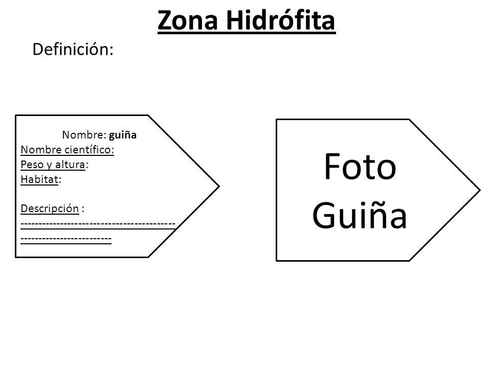 Zona Hidrófita Definición: Nombre: guiña Nombre científico: Peso y altura: Habitat: Descripción : ------------------------------------------ ------------------------- Foto Guiña