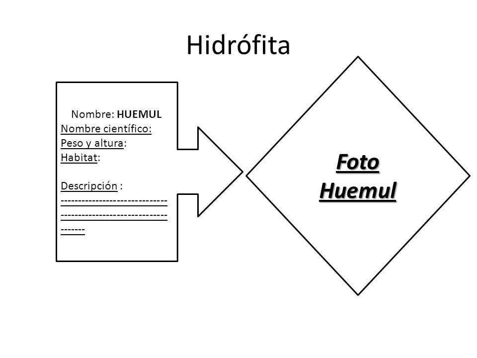 Hidrófita Nombre: HUEMUL Nombre científico: Peso y altura: Habitat: Descripción : ------------------------------ ------------------------------ ------- Foto Huemul